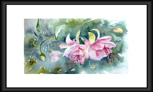 Fuschias - Aquarelle 2009 (Emile Wouters)